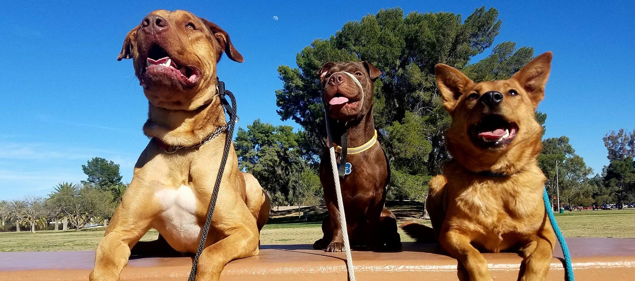 Dog Training In Home Tucson
